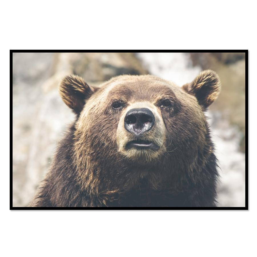 [Image: Grizzly Bear Wall Poster Prints]